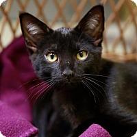 Adopt A Pet :: Giddeon - Kettering, OH