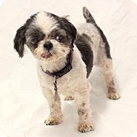 Adopt A Pet :: Roxy - Bradenton, FL