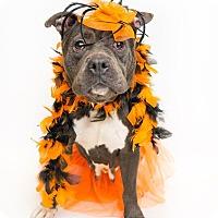 Adopt A Pet :: Anya - Reisterstown, MD