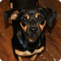 Adopt A Pet :: Betty - Prosser, WA