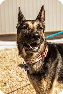 German Shepherd Dog Mix Dog for adoption in Phoenix, Arizona - Pheonix