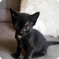 Adopt A Pet :: Sage - Austin, TX