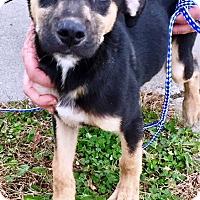 Adopt A Pet :: Kringle - Oswego, IL