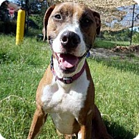 Adopt A Pet :: REMY - Jacksonville, FL