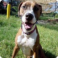 Adopt A Pet :: REMY - Jacksonville, FL