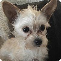 Adopt A Pet :: West - Los Angeles, CA