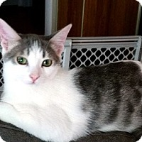 Adopt A Pet :: Mason - Mississauga, Ontario, ON
