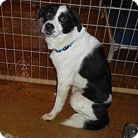 Adopt A Pet :: REBEL - Toronto, ON