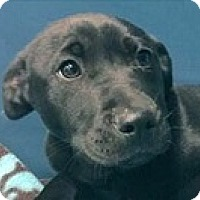 Adopt A Pet :: Bill - Springdale, AR