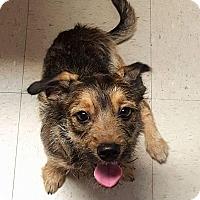 Adopt A Pet :: Rogue - Stow, ME