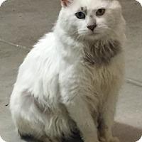 Adopt A Pet :: Izzy - Yorba Linda, CA
