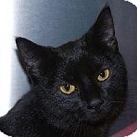 Adopt A Pet :: Sadie - Sacramento, CA