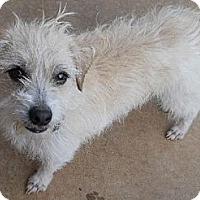Adopt A Pet :: Russell - dewey, AZ