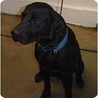 Adopt A Pet :: Max - Cumming, GA