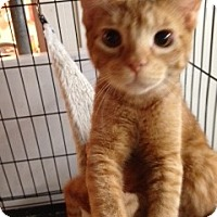 Adopt A Pet :: Rusty - Wenatchee, WA