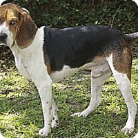 Adopt A Pet :: Jude - Tallahassee, FL