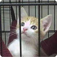 Adopt A Pet :: Corbin - Island Park, NY