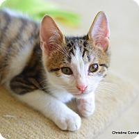 Adopt A Pet :: Gino - Island Park, NY