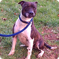 Adopt A Pet :: Benny - Metamora, IN