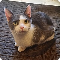 Adopt A Pet :: Emily - East Meadow, NY