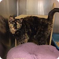 Adopt A Pet :: Mona - Colmar, PA