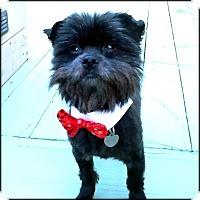 Adopt A Pet :: FRANCIS BACON - ADOPTION PEND - Seymour, MO