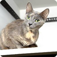 Adopt A Pet :: Opal - Aiken, SC