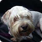 Adopt A Pet :: Hiker -Courtesy Post