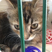 Adopt A Pet :: Linda - Caistor Centre, ON