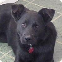 Adopt A Pet :: BABY - Paron, AR
