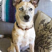 Adopt A Pet :: Mikka - Delano, MN