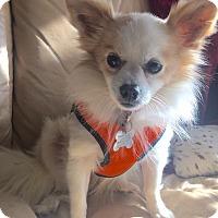 Adopt A Pet :: Timo - San Francisco, CA