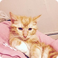 Adopt A Pet :: Basil - East Brunswick, NJ