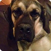 Adopt A Pet :: Prince - Chambersburg, PA