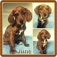 Adopt A Pet :: June meet me 4/8 - Manchester, CT