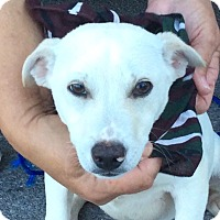 Adopt A Pet :: Casper - Rochester, NY