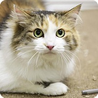 Adopt A Pet :: Sunshine - Kettering, OH