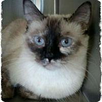 Adopt A Pet :: MoMo - Pueblo West, CO
