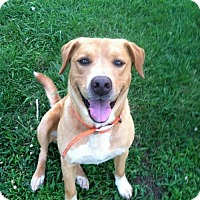 Adopt A Pet :: Champion - Staunton, VA