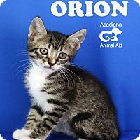 Adopt A Pet :: Orion - Carencro, LA