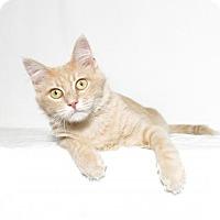 Adopt A Pet :: Mango - Lufkin, TX