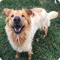 Adopt A Pet :: Sasha - Baltimore, MD