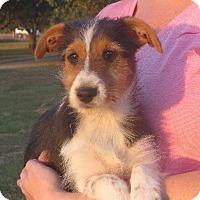 Adopt A Pet :: Renee - Westport, CT