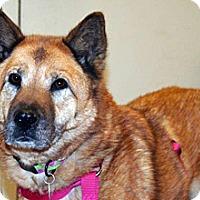Adopt A Pet :: Dusty - Wildomar, CA