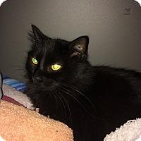 Adopt A Pet :: Sadie - West Warwick, RI