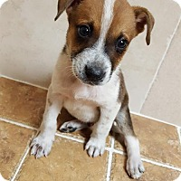 Adopt A Pet :: Davey - Key Largo, FL