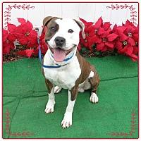 Adopt A Pet :: BRONSON - Marietta, GA