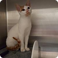 Adopt A Pet :: Lyon - Henderson, NC