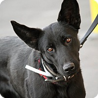 Adopt A Pet :: Nova - Palmdale, CA