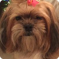 Adopt A Pet :: Emma - Santa Clarita, CA